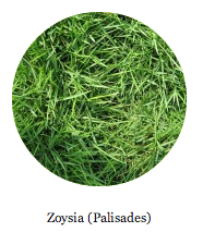 zoysia grass buy dallas