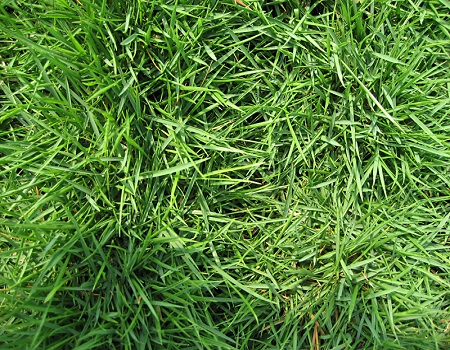 grass at best prices