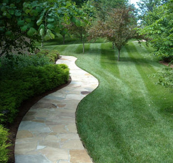 where to buy sod north texas dallas area pathway